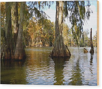 Swamp - Cypress Trees Wood Print by Beth Vincent
