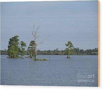 Wood Print featuring the photograph Swamp Cypress Trees by Joseph Baril