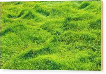 Swamp Grass Abstract Wood Print by Gary Slawsky