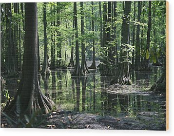 Wood Print featuring the photograph Swamp Land by Cathy Harper