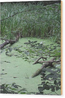 Wood Print featuring the photograph Swamp by Nora Boghossian