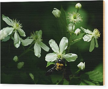 Swamp Rose With Carpenter Bee Wood Print by Rebecca Sherman