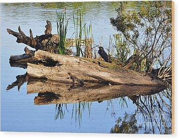 Swamp Scene Wood Print by Al Powell Photography USA