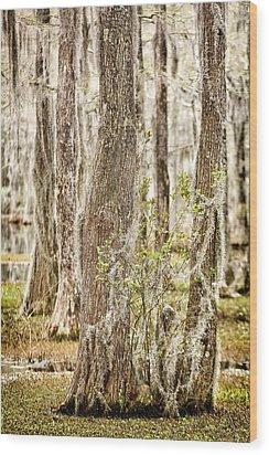 Swamp Trees Wood Print by Denis Lemay