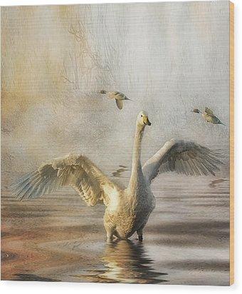 Wood Print featuring the photograph Swan At Sundown by Brian Tarr