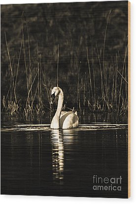 Wood Print featuring the photograph Swan B/w by Rose-Maries Pictures