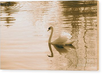 Swan Wood Print by Charline Xia