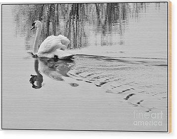 Wood Print featuring the photograph Swan Elegance by Simona Ghidini