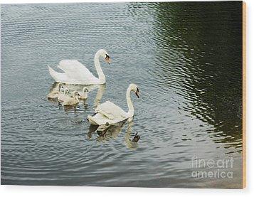 Swan Family Wood Print by Jim  Calarese