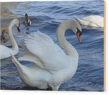 Swan Grace Wood Print