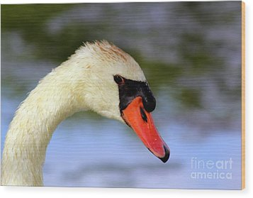 Swan Head Shot Wood Print