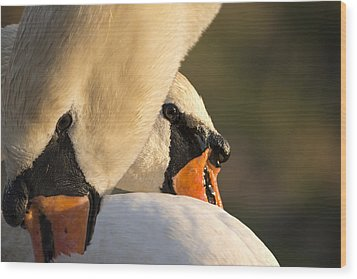 Swan Heads Wood Print by Michael Mogensen