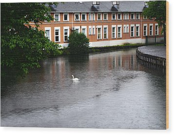 Swan In Dublin Wood Print