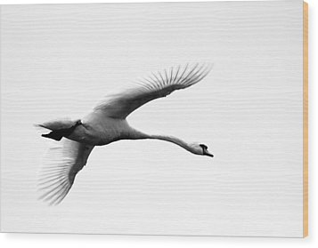Swan In Flight Black And White Wood Print by Diane Rada