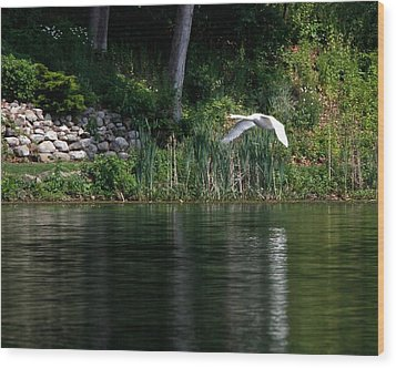 Wood Print featuring the photograph Swan In Flight by Eleanor Abramson