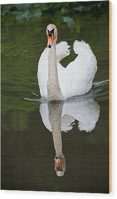 Swan In Motion Wood Print by Gary Slawsky