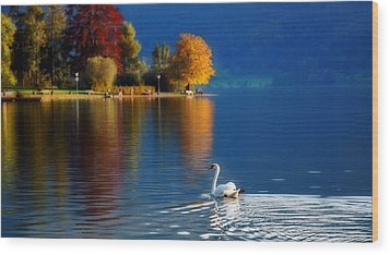 Beautiful Autumn Swan At Lake Schiliersee Germany  Wood Print