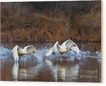 Swan Lake Wood Print by Mike  Dawson