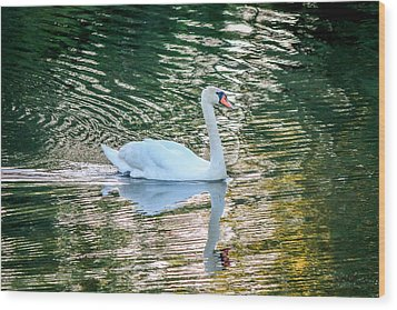 Wood Print featuring the photograph Swan On Water  by Trace Kittrell