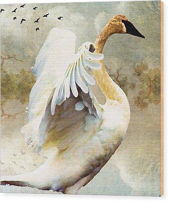 Swan Sense Wood Print