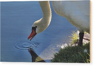 Wood Print featuring the photograph Swan Song by Cathy Donohoue