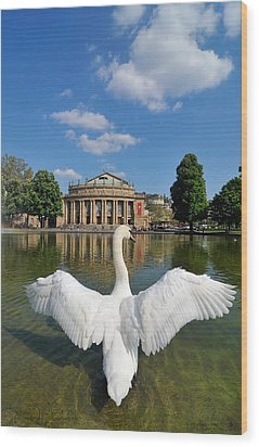 Swan Spreads Wings In Front Of State Theatre Stuttgart Germany Wood Print by Matthias Hauser
