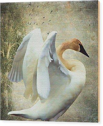 Swan - Summer Home Wood Print