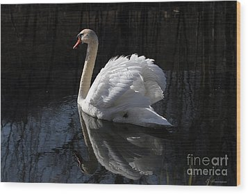 Swan With Reflection  Wood Print by Eleanor Abramson
