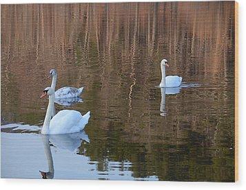 Swans 2 Wood Print
