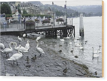 Swans And Ducks In Lake Lucerne In Switzerland Wood Print by Ashish Agarwal