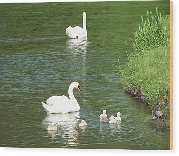 Wood Print featuring the photograph Swans And Turtles by Teresa Schomig