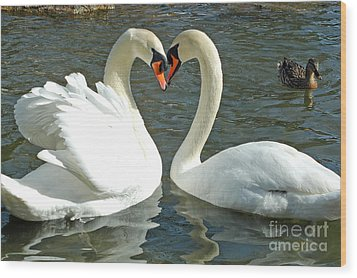 Swans At City Park Wood Print by Olivia Hardwicke