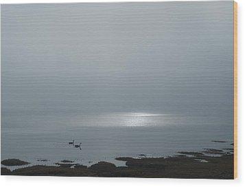 Swans At Sunrise Wood Print