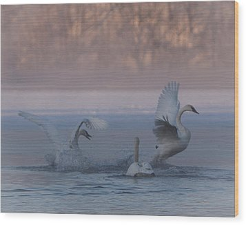 Swans Chasing Wood Print by Patti Deters