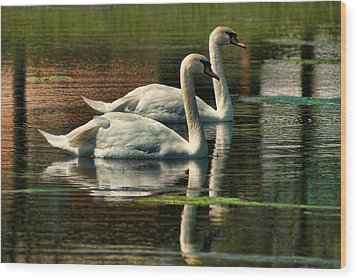 Swans Cruising Wood Print