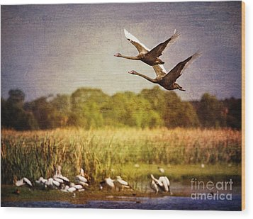 Swans In Flight Wood Print