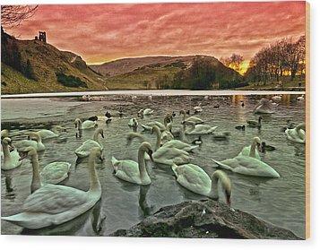 Swans In The Loch Wood Print by Jean-Noel Nicolas