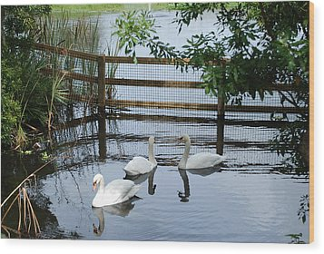 Swans In The Pond Wood Print by Beverly Stapleton