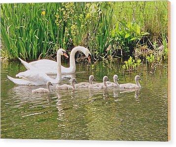 Swans Wood Print by Janice Drew