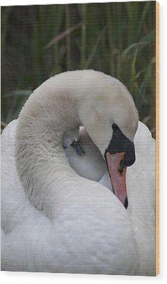 Swans Love Wood Print