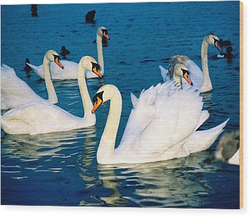 Swans Wood Print by Matthew Bamberg