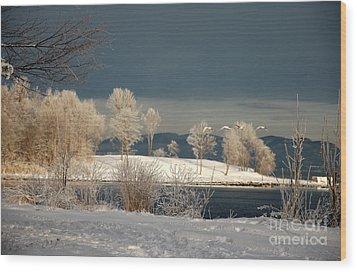 Swans On A Frosty Day Wood Print by Randi Grace Nilsberg