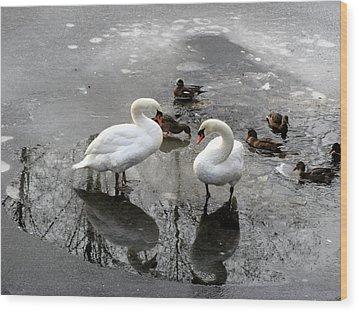 Swans On Thin Ice Wood Print