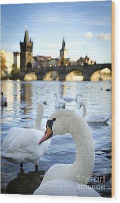 Swans On Vltava River Wood Print by Jelena Jovanovic