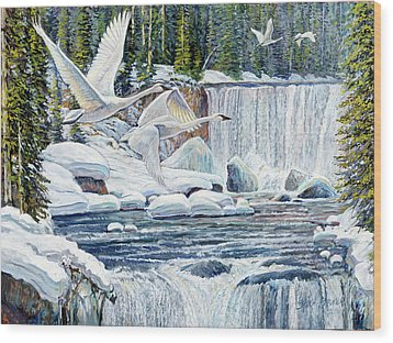 Swans Over Collonade Falls Wood Print by Steve Spencer
