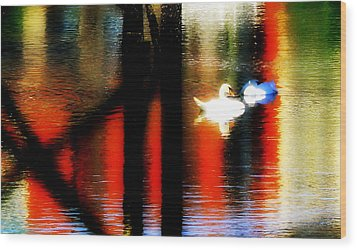 Wood Print featuring the photograph Swans Sojourn by Aurelio Zucco