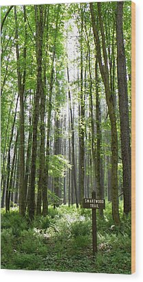 Swartwood Trail Wood Print by Jennifer Compton