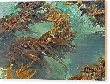 Swaying Seaweed Wood Print by Susan Wiedmann