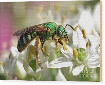 Wood Print featuring the photograph Sweat Bee by Kathy Baccari