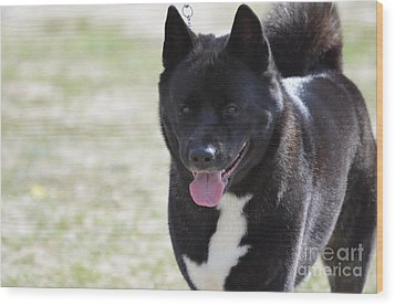 Sweet Akita Dog Wood Print by DejaVu Designs